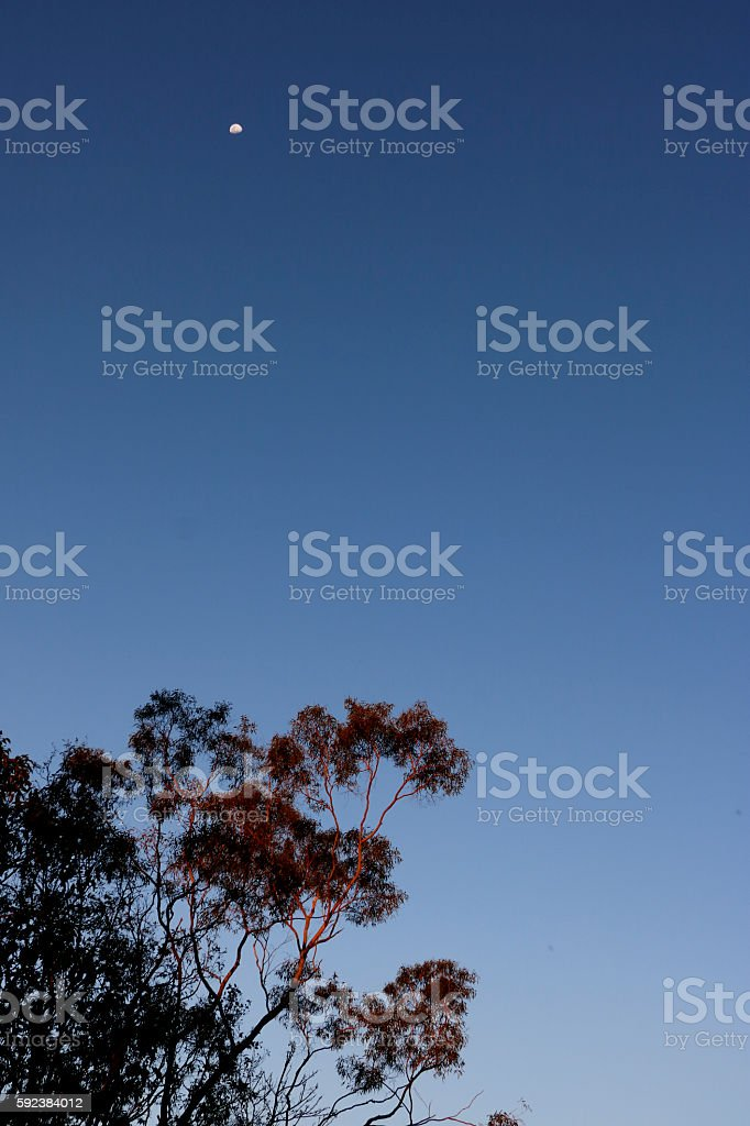 Twilight and Moon Above with Sunset Colors Reflecting on Tree stock photo