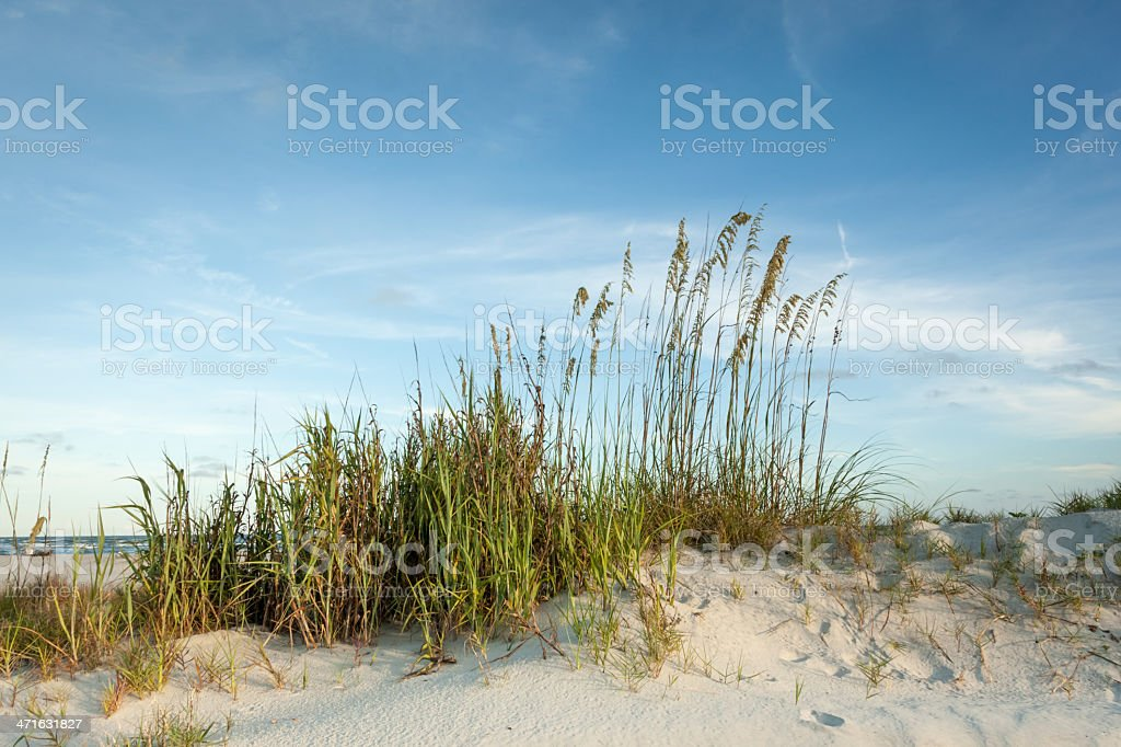 Twilight Dunes along the Shore royalty-free stock photo