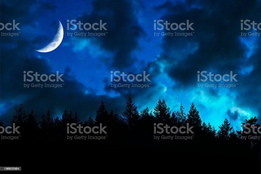 twilight forest moon stock photo