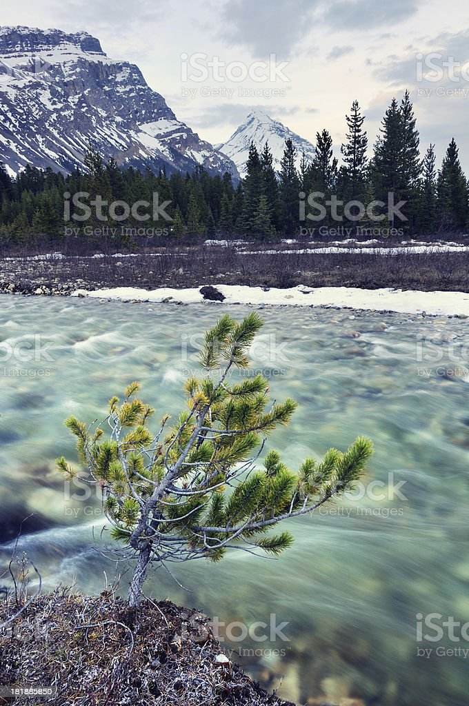 Twilight mountain landscape at Bow River, Canadian Rokies royalty-free stock photo