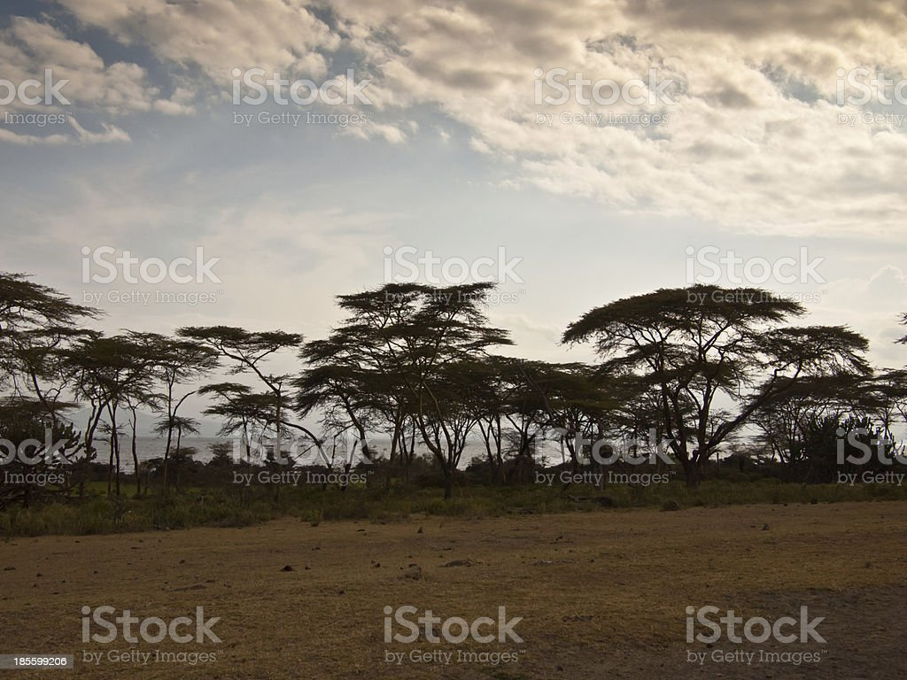 Twilight on the lake Naivasha royalty-free stock photo