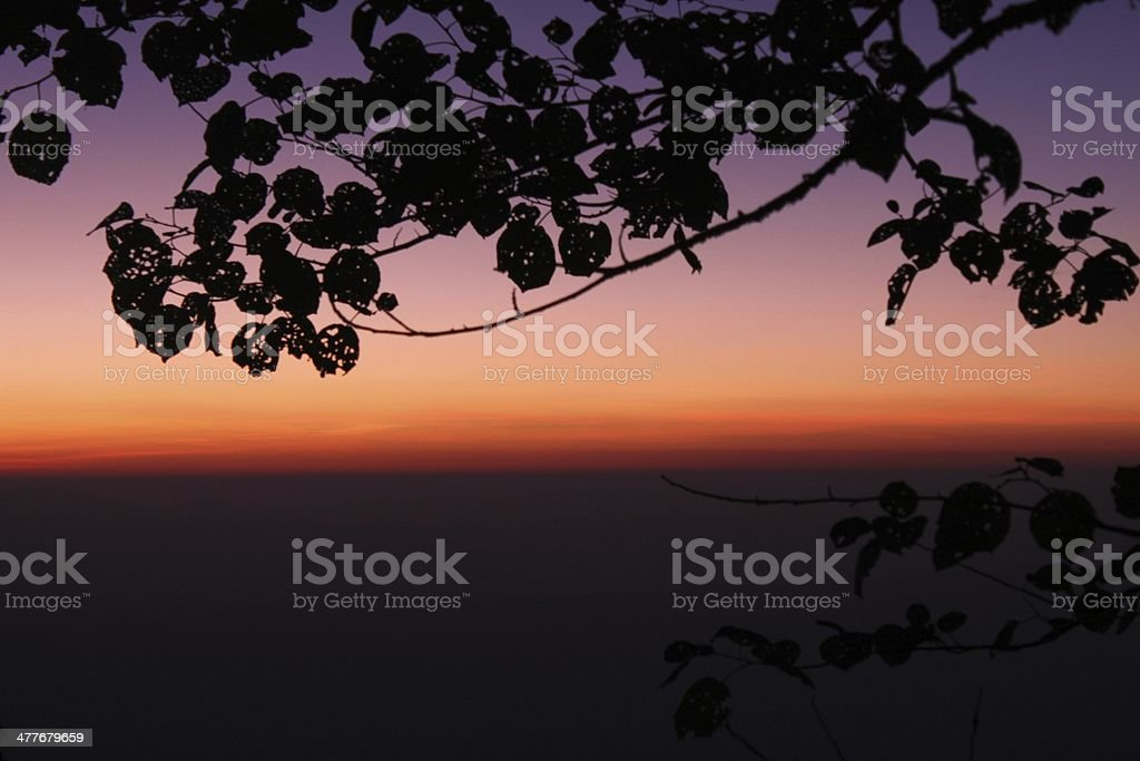twilight scene in the forest royalty-free stock photo