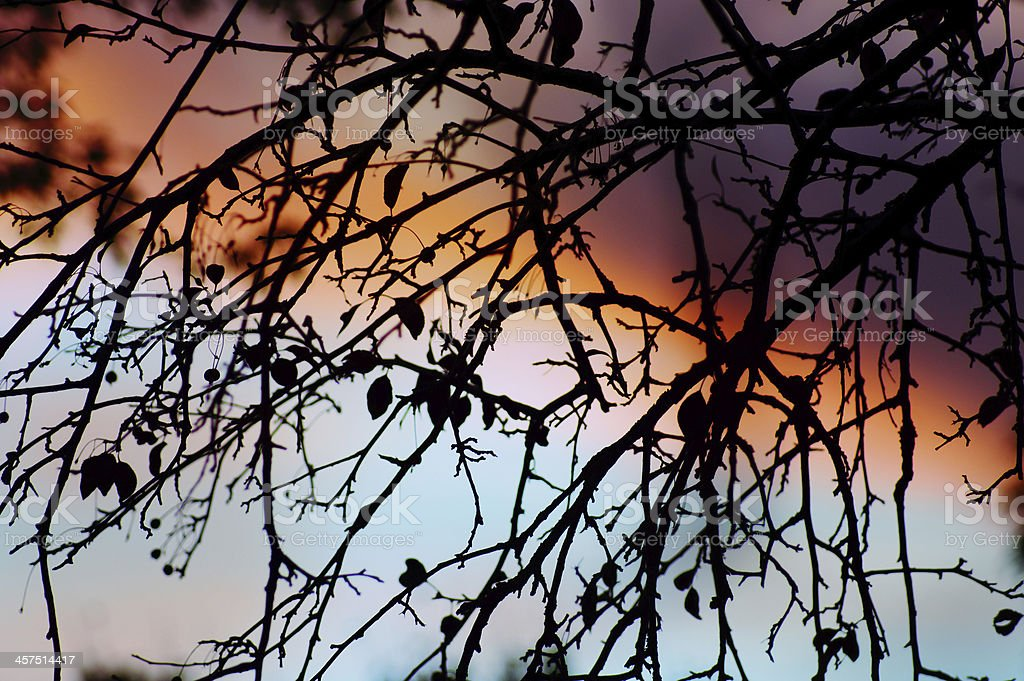 Twilight through branches : Colorful sunset back lit tree royalty-free stock photo
