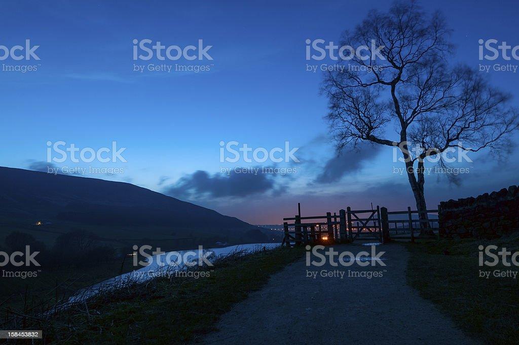 twilight tree stock photo