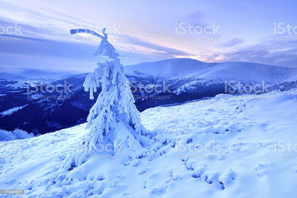 Twilight winter landscape with lone tree covered by snow stock photo