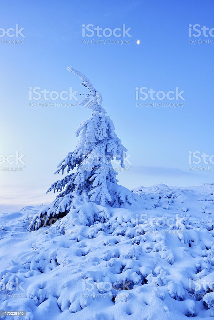Twilight winter landscape with tree covered by snow and moon stock photo