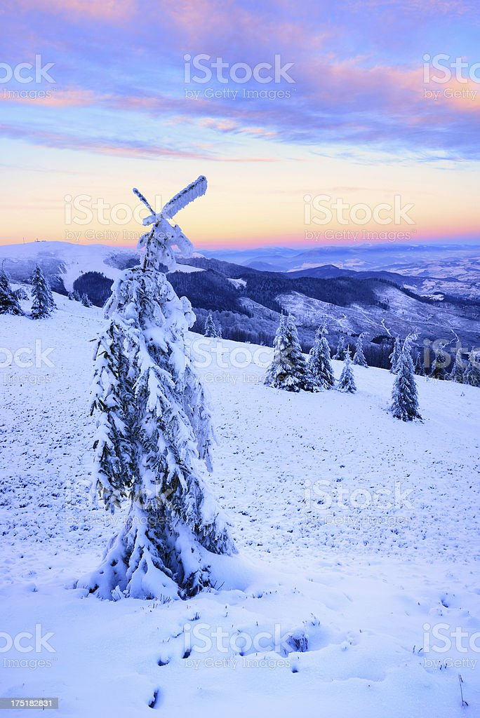 Twilight winter landscape with trees covered by snow stock photo