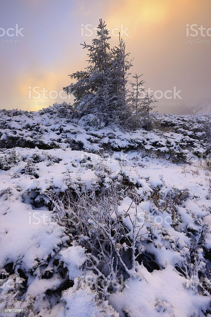 Twilight winter landscape with trees covered by snow royalty-free stock photo