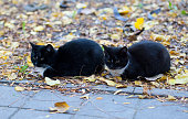 Twin black cats sitting in the park