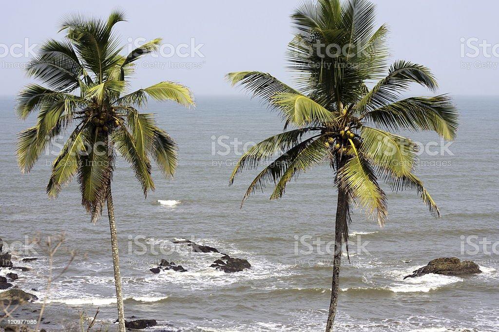 twin palm stock photo