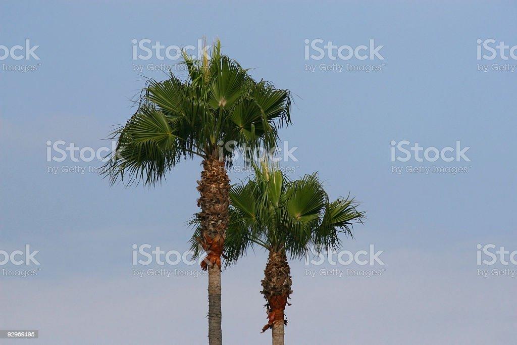 Twin Palms royalty-free stock photo