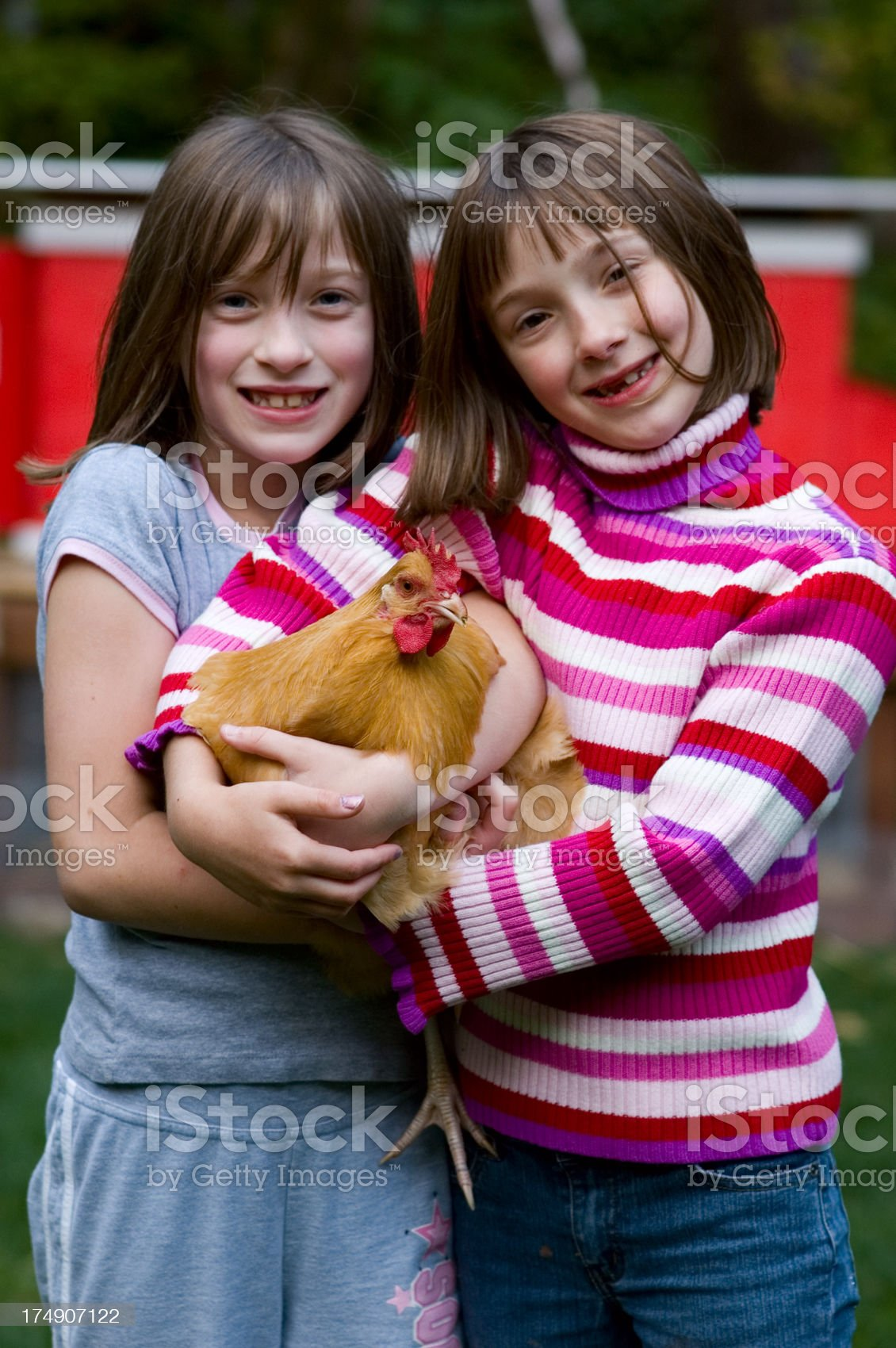 Twin Sisters Holding Hen royalty-free stock photo