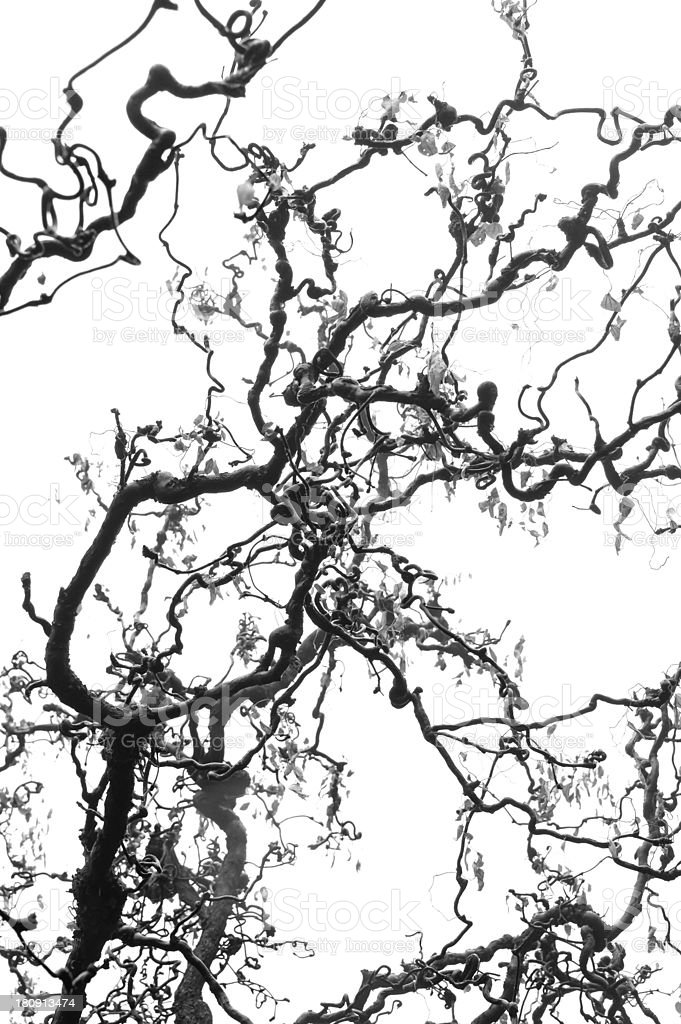 Twisted and complicated branches Isolated royalty-free stock photo
