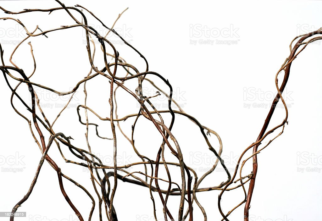 Twisted decorative branches for a floral arrangement stock photo