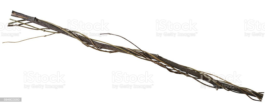 Twisted dried vines on dried tree branch isolated on white stock photo