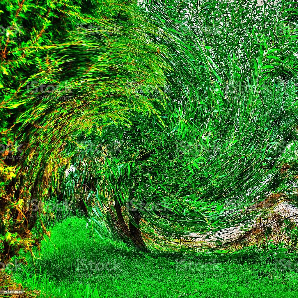 Twisted green tree stock photo