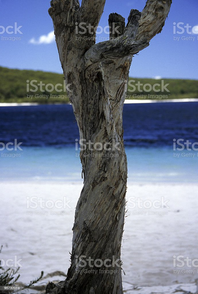 Twisted old tree against blue lake and sky royalty-free stock photo