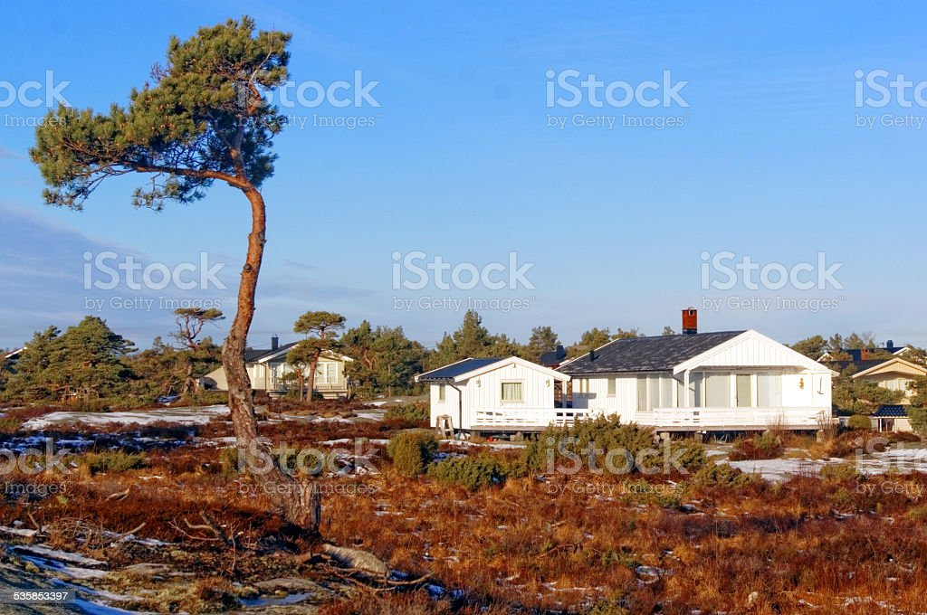 Twisted pine on the moor stock photo