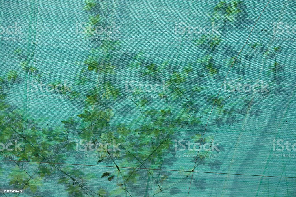 Twisted plant which seen through translucent ceiling. stock photo