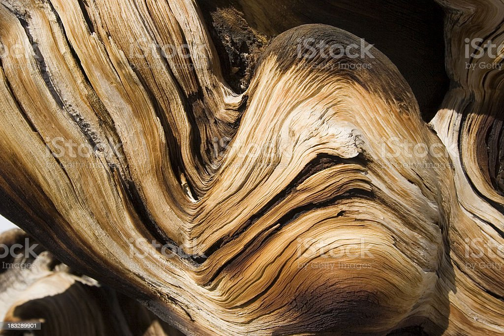 Twisted Sister royalty-free stock photo