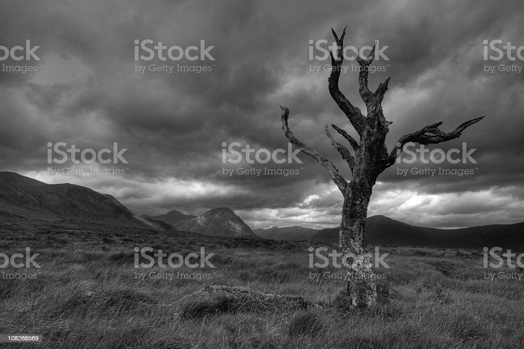 Twisted tree beneath stormy skies on Rannoch Moor. stock photo