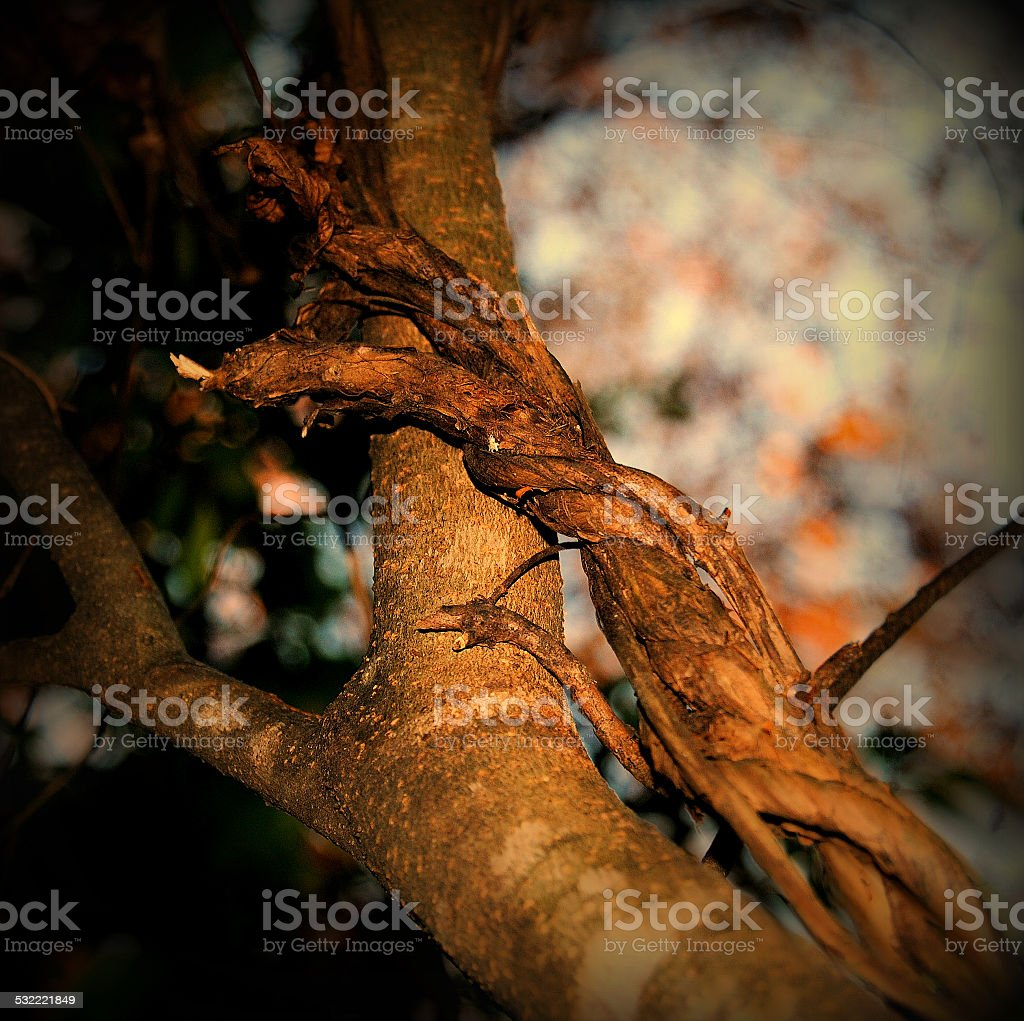 Twisted Tree Branch stock photo