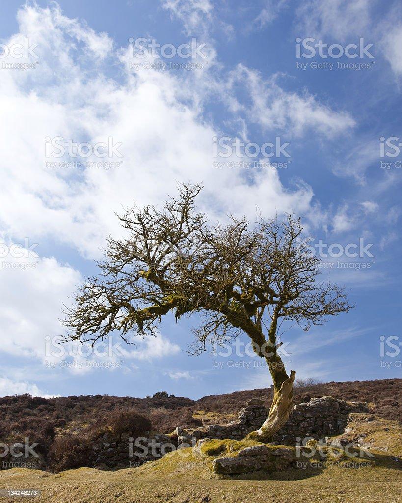 Twisted tree photo libre de droits