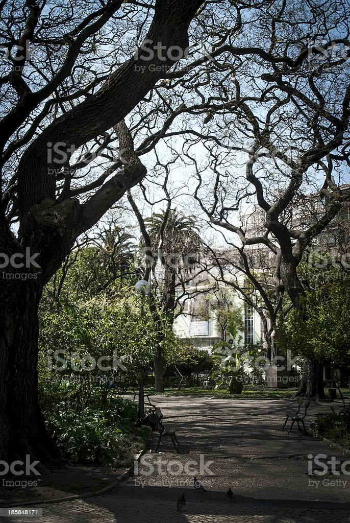 Twisted Tree royalty-free stock photo