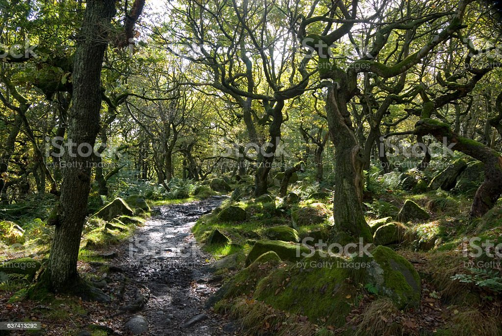 Twisted Trees, Longshaw Estate, Peak District, UK stock photo