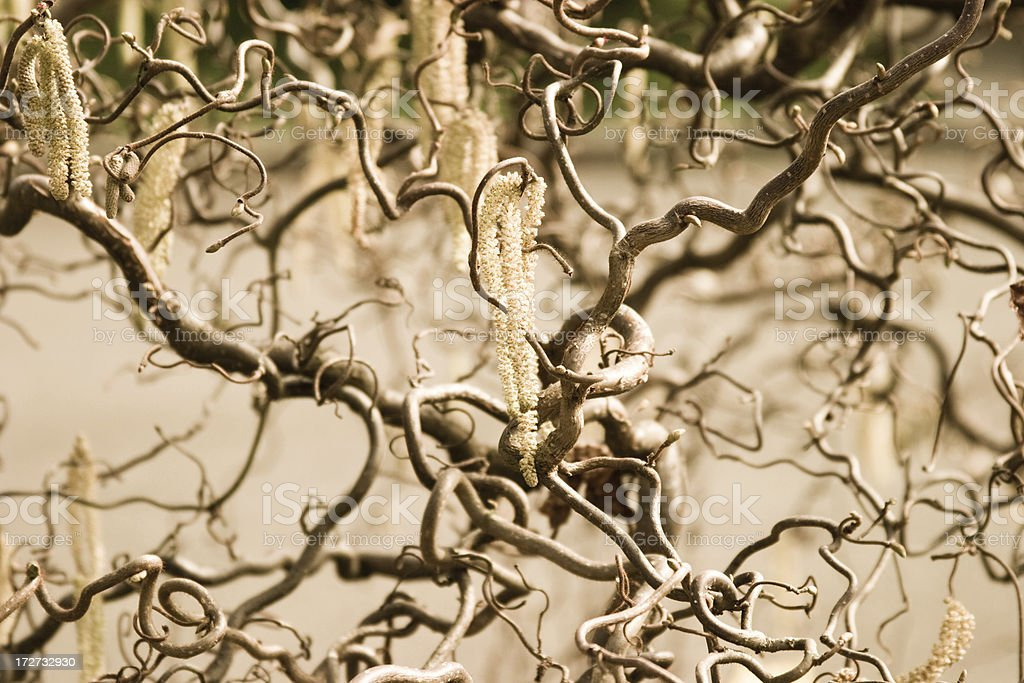 Twisted Vines royalty-free stock photo