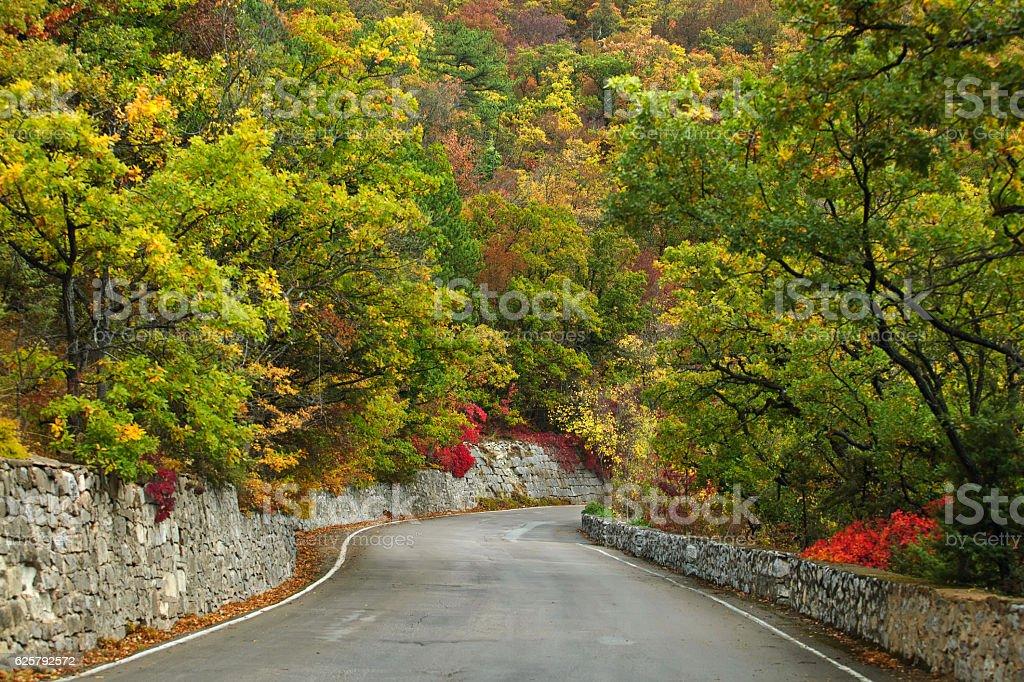 Twisting road through autumn mountain forest stock photo