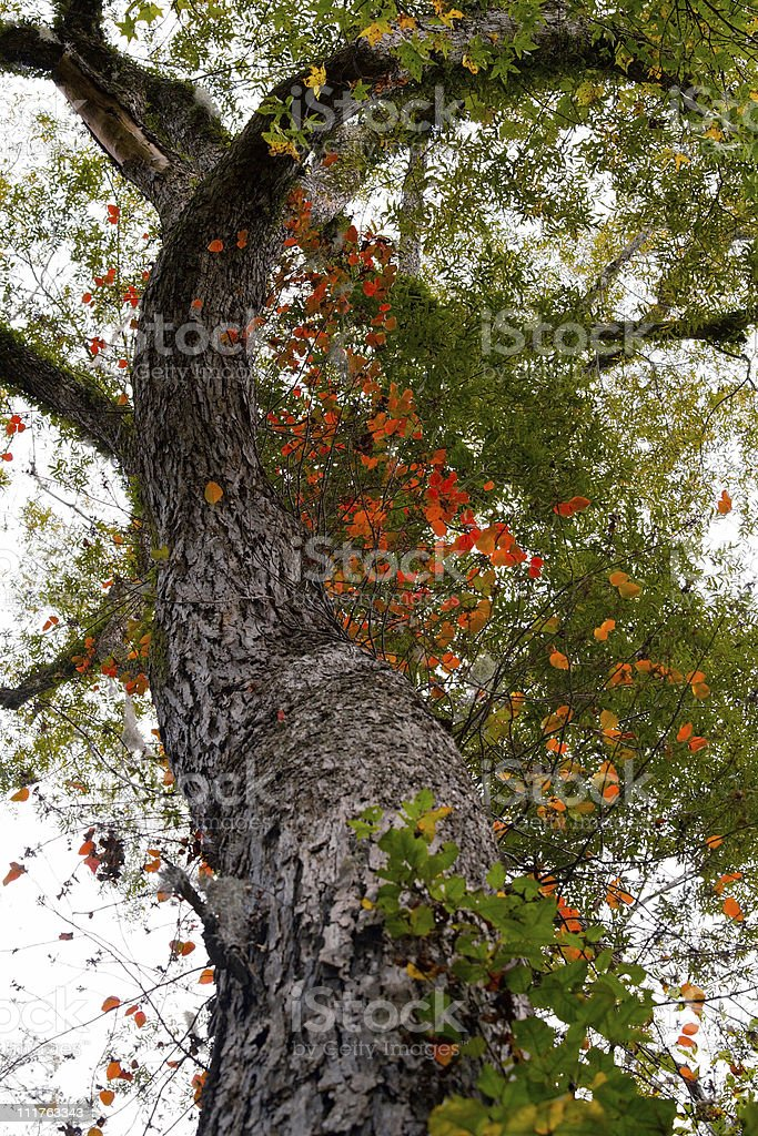 Twists In The  Autumn Color Palette royalty-free stock photo