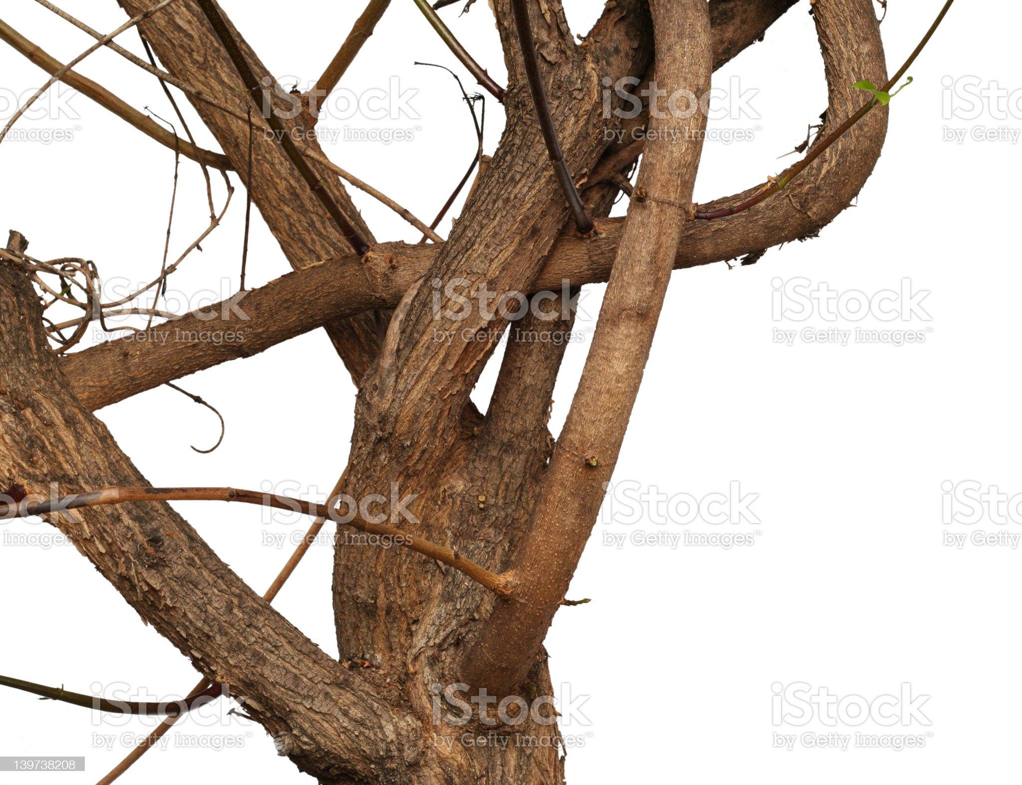 Twisty branch royalty-free stock photo