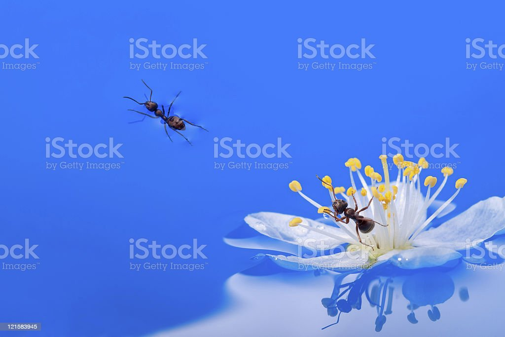 Two ants royalty-free stock photo