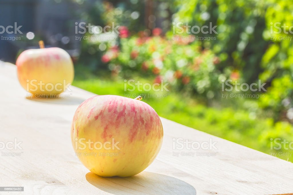Two apples on a wooden table in a flowering garden stock photo
