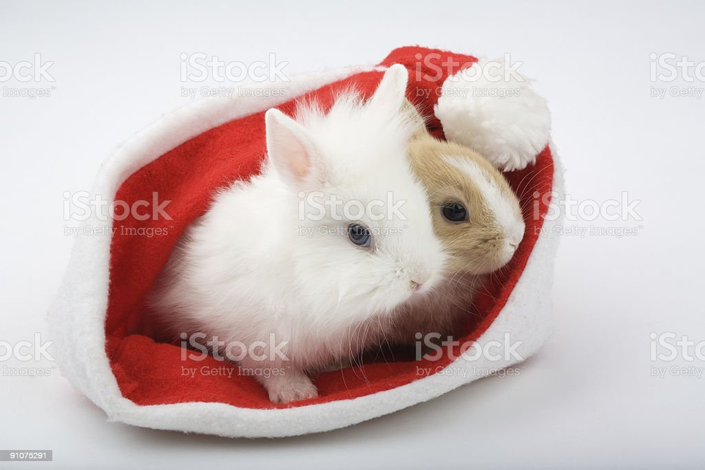 two baby bunnies are looking out of a santa hat royalty-free stock photo