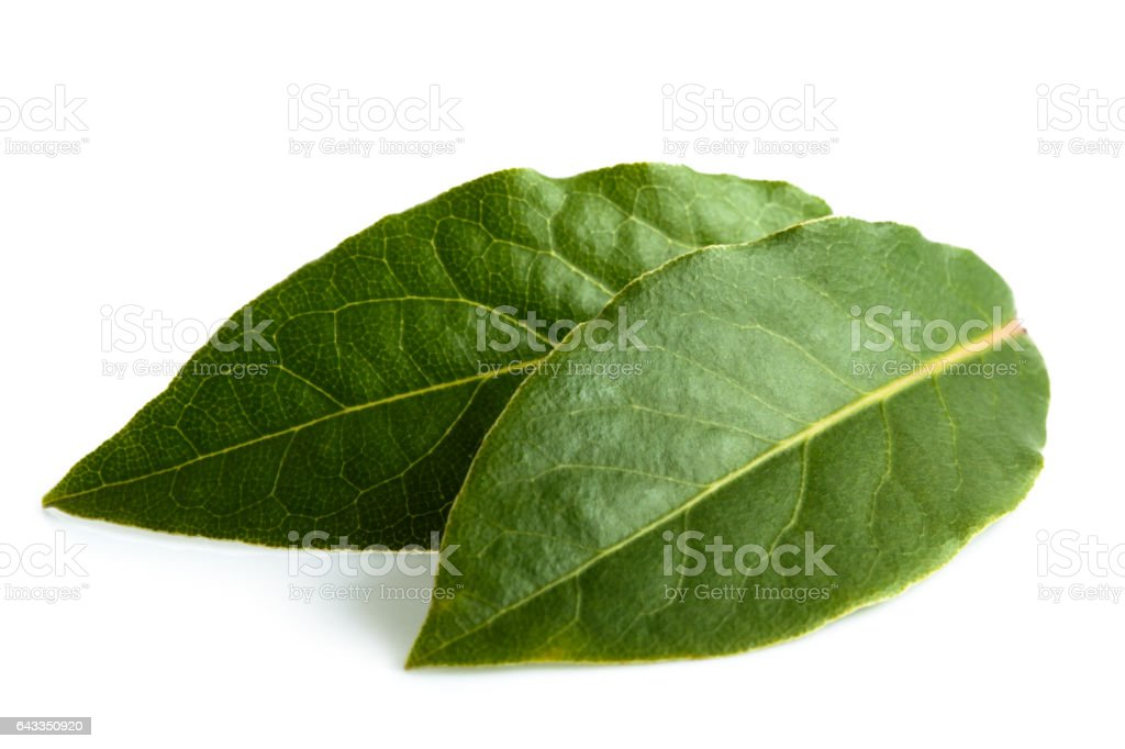 Two bay leaves isolated on white. stock photo
