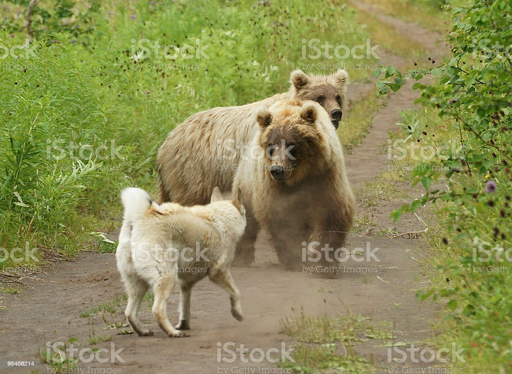 Two bears and dog stock photo