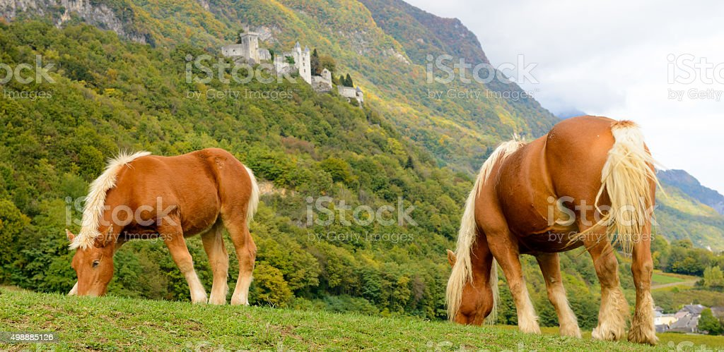 two beautiful brown horses at the base of the mountain stock photo