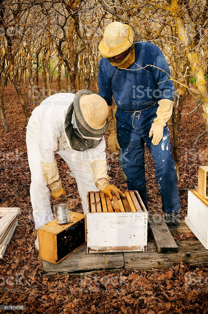 Two Bee Keepers Re-Queening a Hive of Bees stock photo