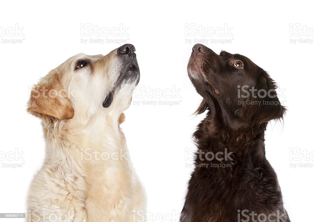 Two begging dogs stock photo