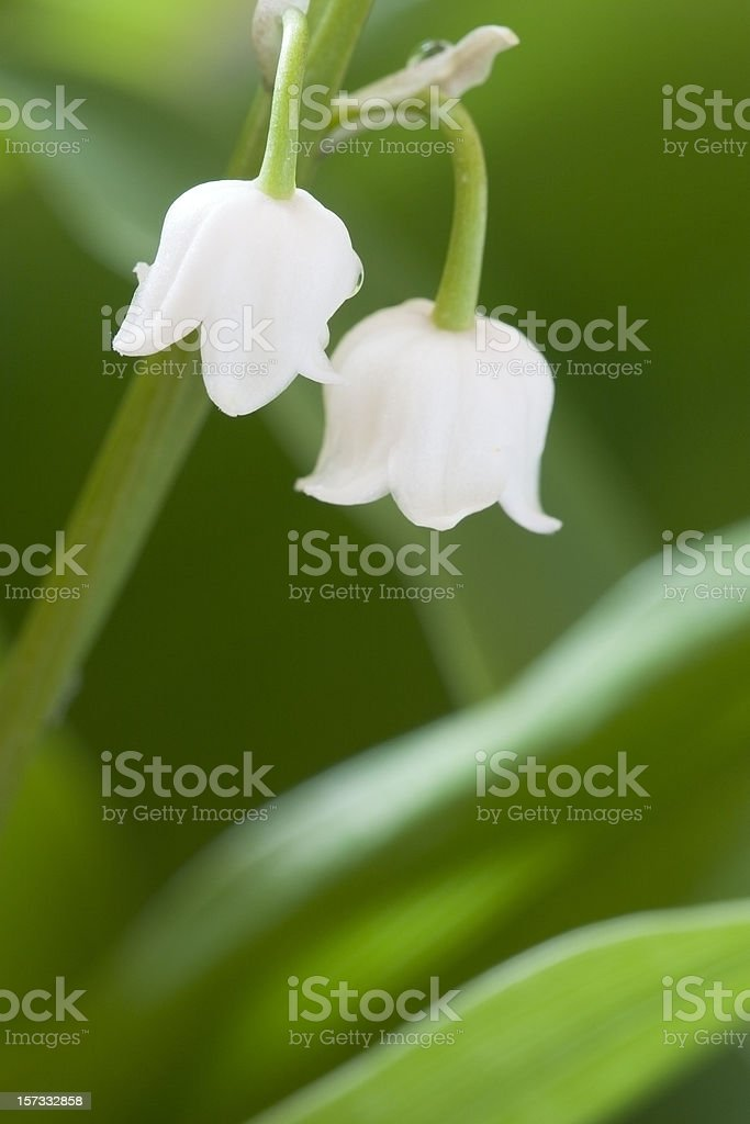 two bells royalty-free stock photo