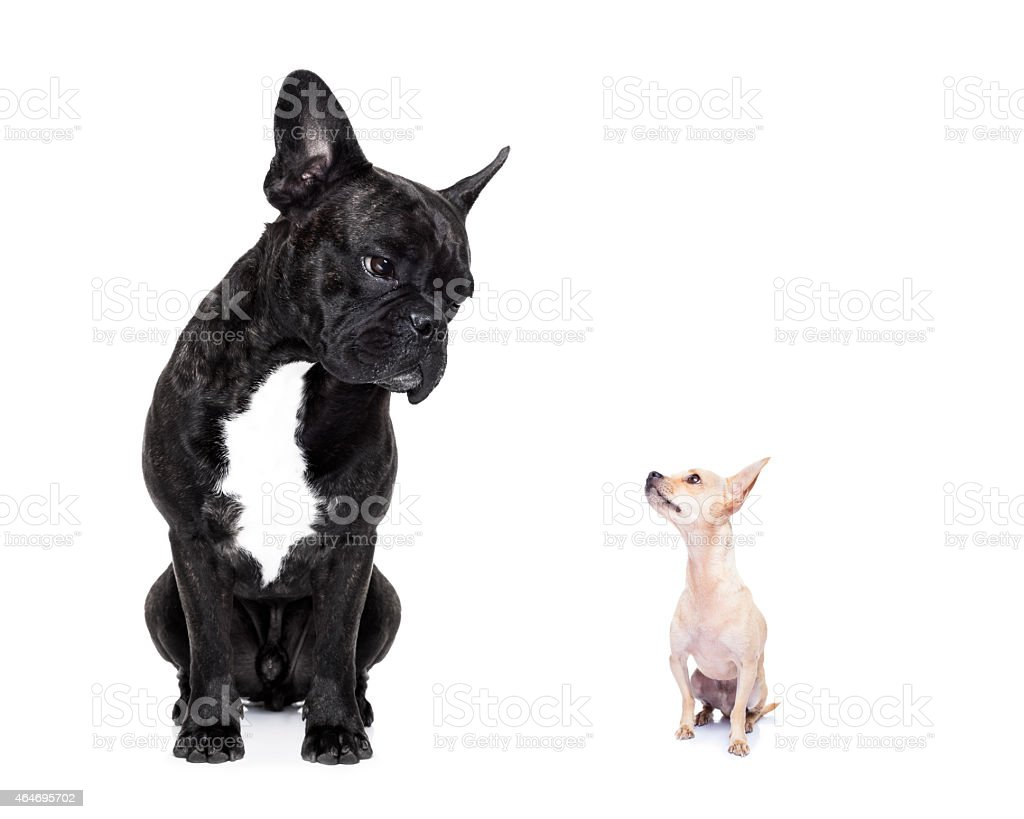 two big and small dogs stock photo