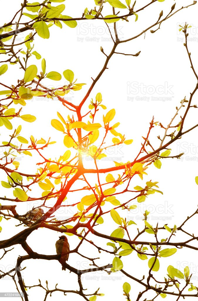 Two birds chirp on spring tree royalty-free stock photo