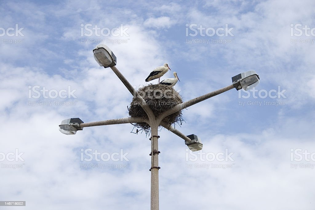 Two birds on the nest royalty-free stock photo