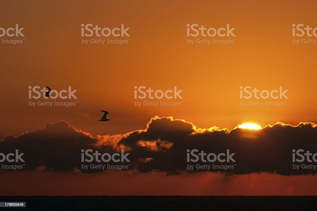 Two Birds royalty-free stock photo