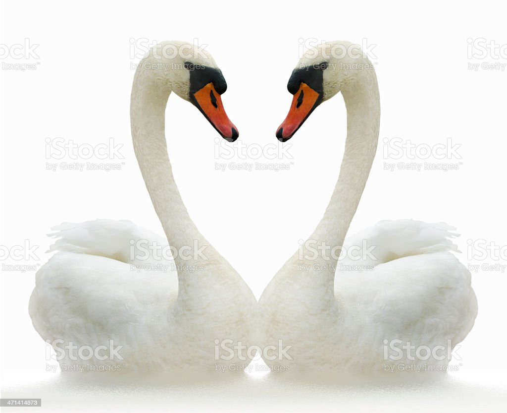 Two birds. stock photo