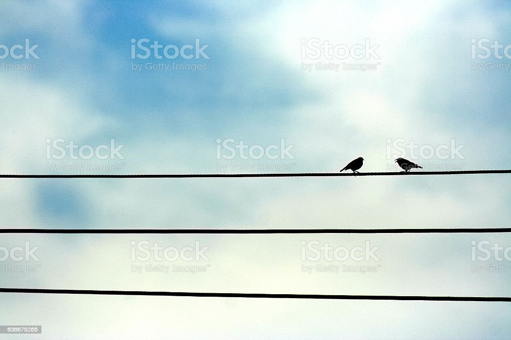 Two birds singing on a cable stock photo