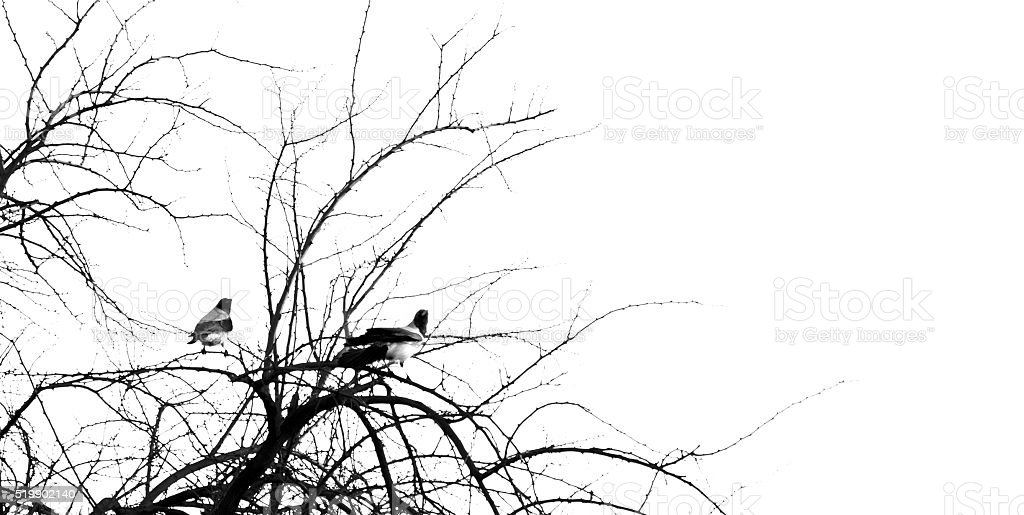 Two birds sitting on a branch stock photo