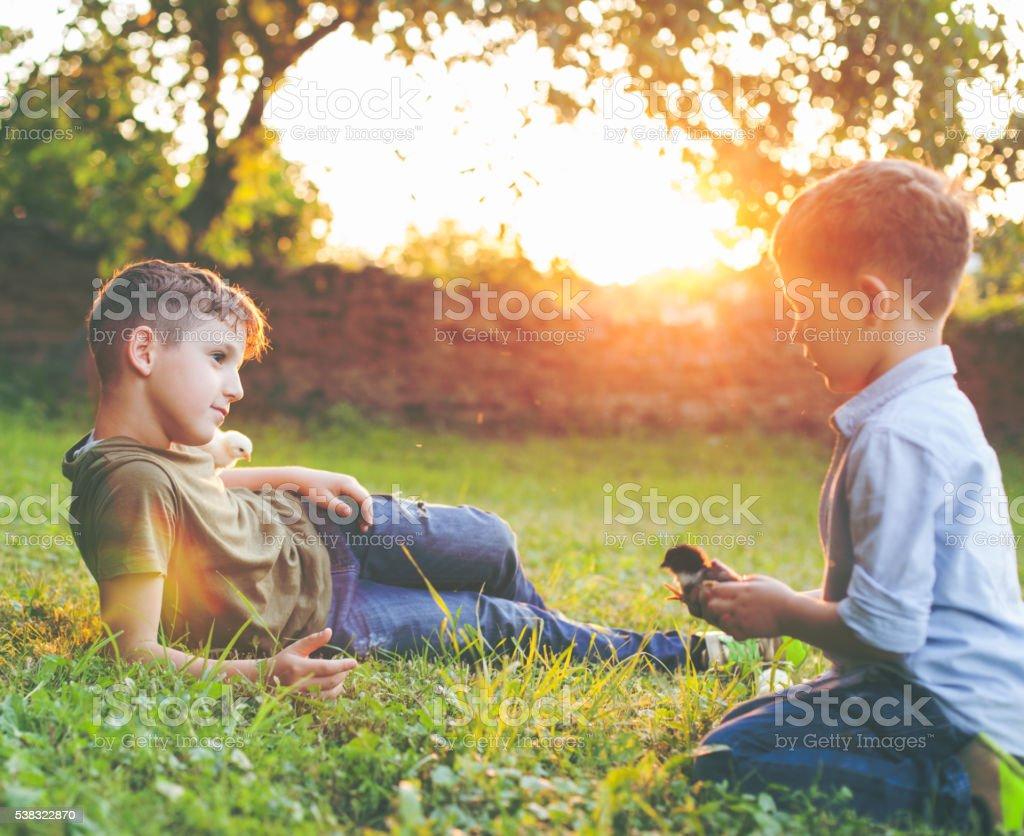 Two boys and baby chicks stock photo